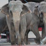 SP-protest mot Vedums elefantpolitikk