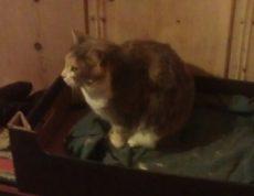 Tre år gammel hunnkatt, som sammen med de andre avbildede og en rekke andre katter er i en situasjon hvor de akutt trenger nye hjem.