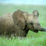 Arendal sier nei til eksotiske dyr i sirkus!