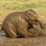 Gran kommune sier nei til eksotiske dyr i sirkus!