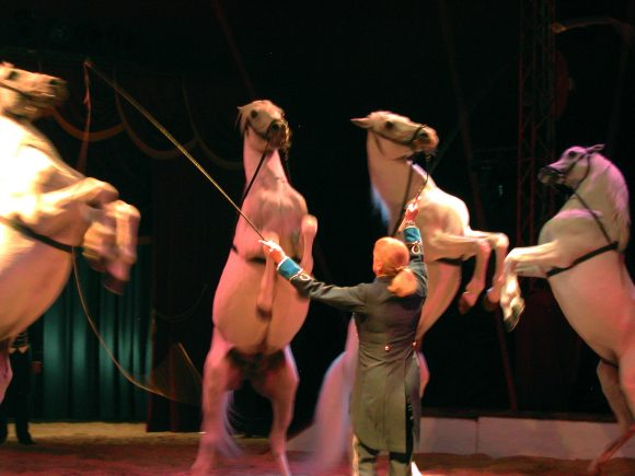 Hester på sirkus.