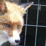 Svar på påstander om pels