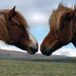 Animalske hormonmedisiner mot plager hos kvinne...
