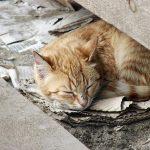 Hvordan kan du hjelpe en hjemløs katt?