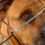 Kampen hvor en hunds liv er innsats