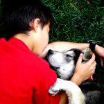 Bokanmeldelse: Omsorgsetikk for dyr