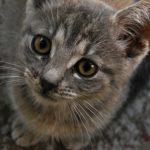 Nes kommune i Buskerud planlegger masseavlivning av katter