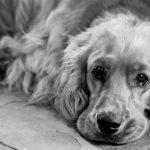 En hunds liv