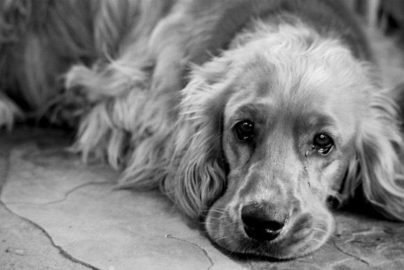 En gammel hund.