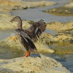 Ingen hjelp for fugler etter oljeutslipp?