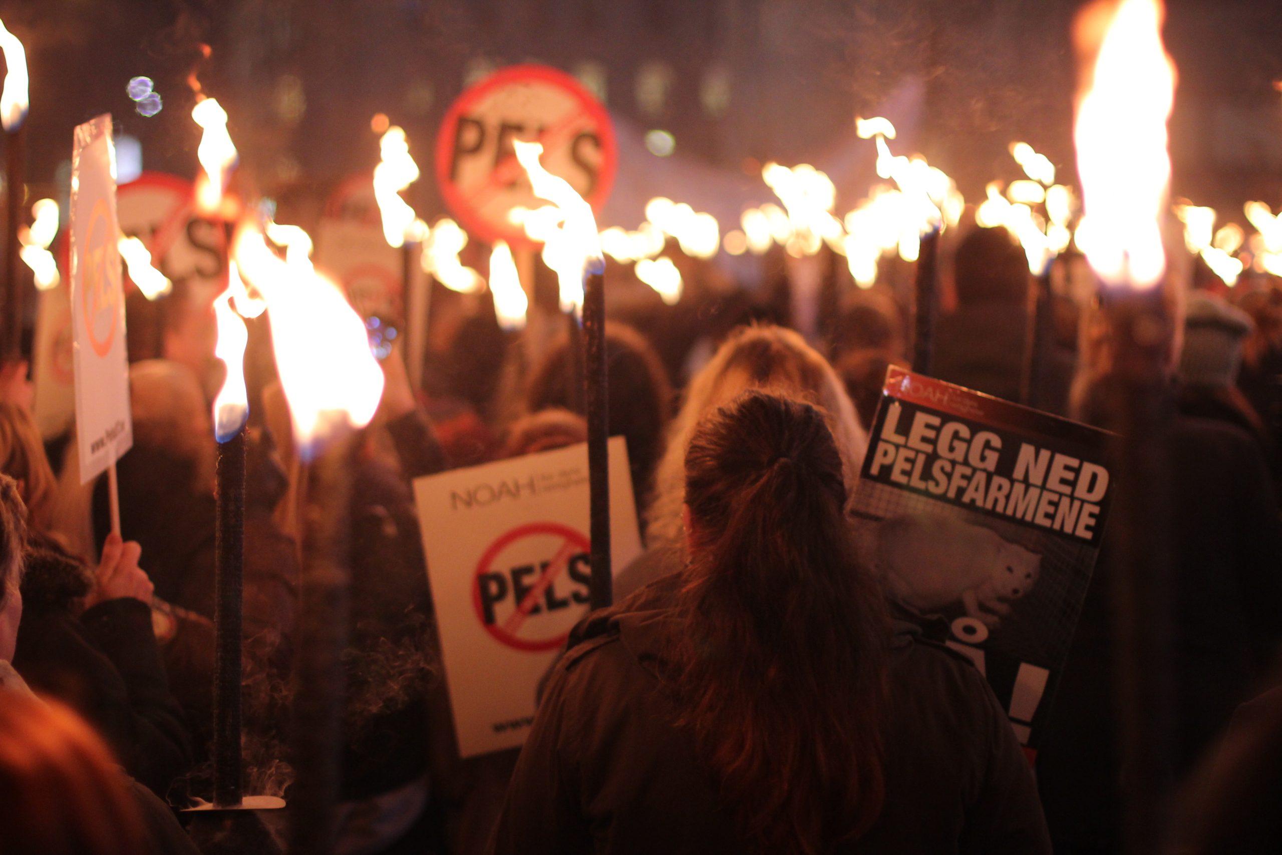 Bilde viser NOAHS fakkeltog og demonstrasjon mot pelsdyroppdrett