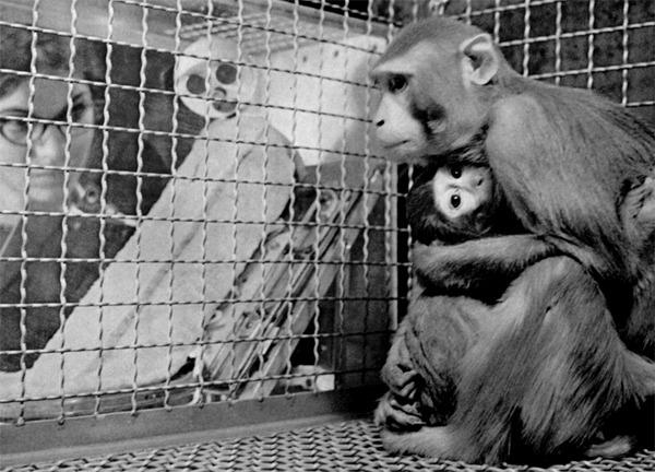 Ape i deprivasjonsforsøk