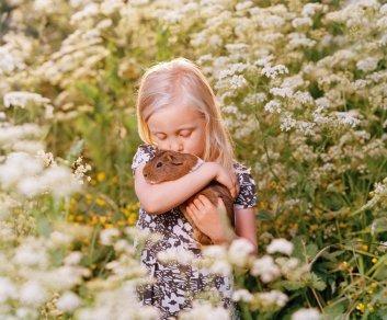 En jente i blomsterengen som koser med marsvinet sitt
