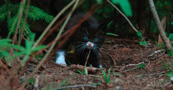 Kattunge. Foto: Øivind Pedersen