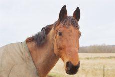 Vurderer du å kjøpe hest? Da har du mulighet til å redde en av de svært mange hestene i Norge som trenger nye hjem!