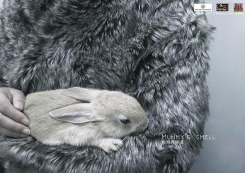 Kanin på plakat mot pels