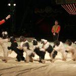 Kypros forbyr bruk av dyr i sirkus!
