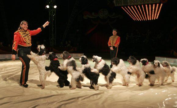 """Hunder på sirkus Merano: Også husdyrene fremstilles som """"dukker"""" for vår underholdning."""