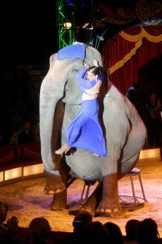 Elefant som rekvisitt i sirkusnummer på Merano.