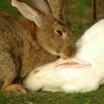 De små nyansene - om kaniner