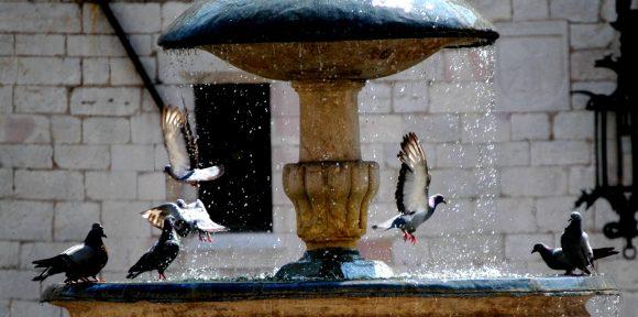 Duer, by, fugler, fontene