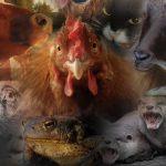 Dyrs følelser teller