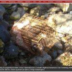 Krev Dyrevelferdslovens strengeste straff for hundedrap