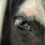 Et hesteliv