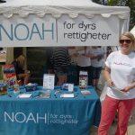 NOAH på Hovefestivalen