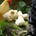 Tips til dyrevennlig påske