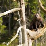 Senterpartiet vil tøye etiske grenser ved jakt