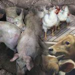 Kjøtt – en vanskelig debatt?
