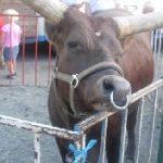 Sirkus-dyr: Kunnskap mot nostalgi