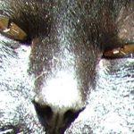 NOAH: - Ta kriminalitet mot dyr på alvor!