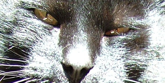 Katteøyne. Foto: NOAH
