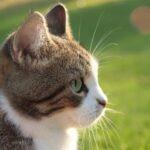 Endring i dyrevelferdsloven kan gi færre avlivninger