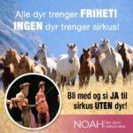 Haugesund: Demonstrasjoner mot bruk av dyr i sirkus.