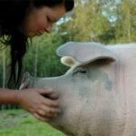En avskjedshilsen til grisen Noah