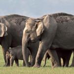 Tromsø vedtar elefant-forbud!
