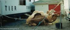 Sirkus som utnytter eksotiske dyr for underholdning er ikke lenger velkomne i ni av landets kommuner.