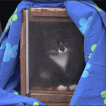NOAHs katteprosjekt - omsorgsprogram i praksis