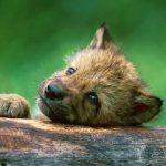 Seier: Ingen endring av Naturmangfoldloven!