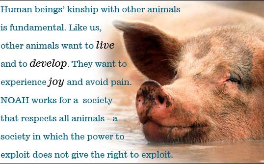 Human beings' kinship with other animals is fundamental. Like us, other animals want to live and to develop. They want to experience joy and avoid pain. NOAH works for a society that respects all animals - a society in which the power to exploit does not give the right to exploit.