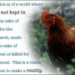 NOAHs vision