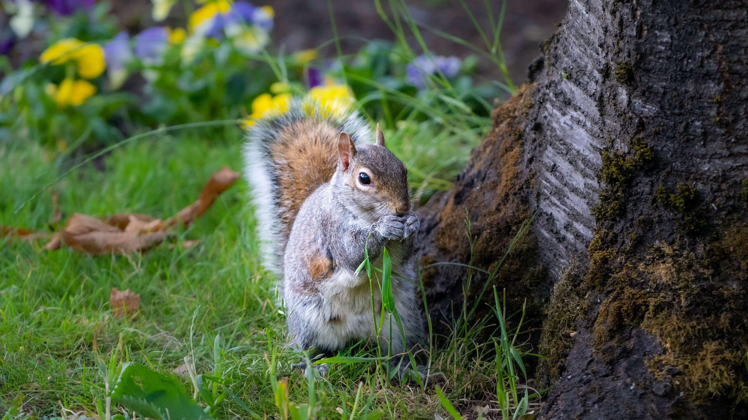 Et ekorn som sitter underet tre