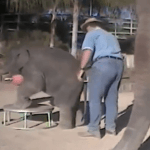 """Vold avslørt mot elefant fra """"Vann til elefantene"""""""