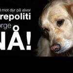 Regjeringen må ta vold mot dyr alvorlig!