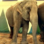 Markering mot Cirkus Merano på Hamar