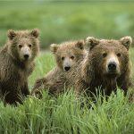 Forholdene for rovdyr i dyrehager