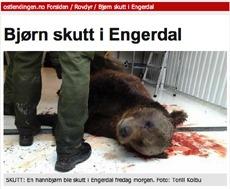 Rovdyr, skutt bjørn.